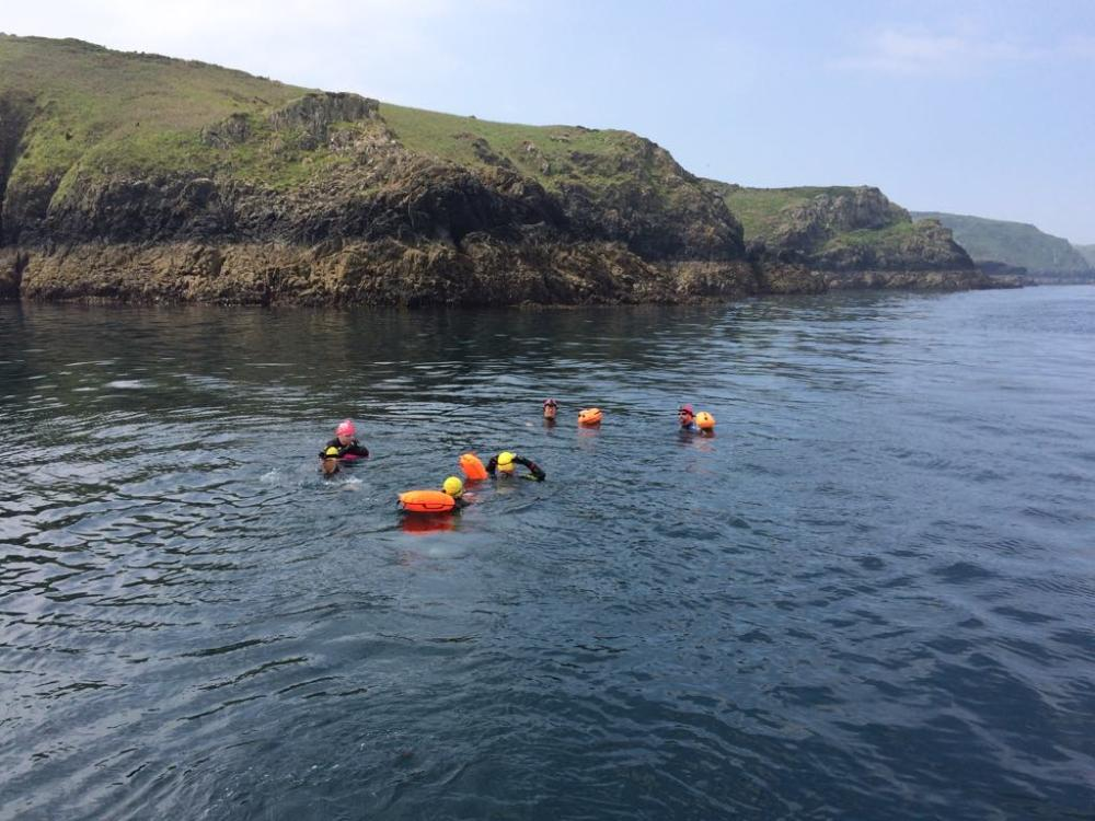 Sea swimming safari tours in Pembrokeshire