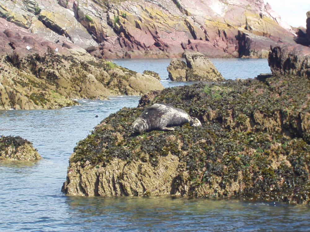Seals are a common sight on our advenbture swims